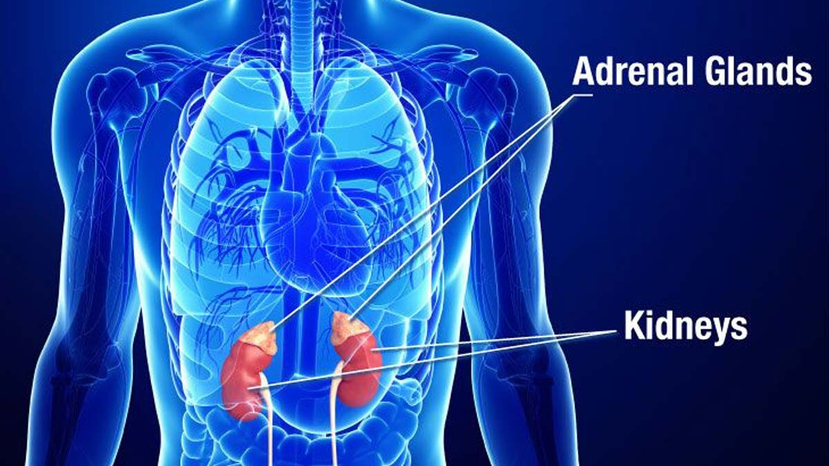 Surgery for Adrenal Tumors